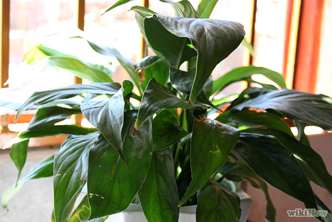 Identifying House Plants By Leaves contemporary identifying house plantsleaves identify pic plant